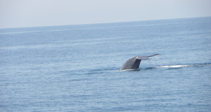 Why I found whale watching disappointing