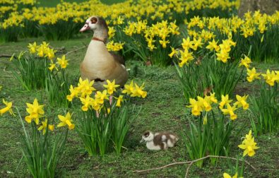 spring-in-london-events-and-activities