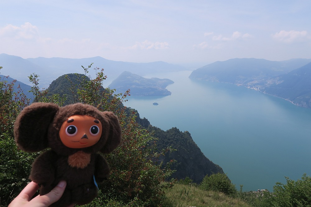 Cheburashka enjoying the views