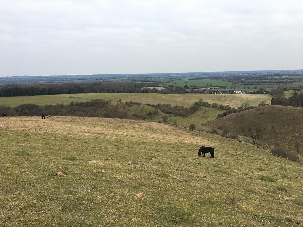Horses at Pegsdon Hills Reserve